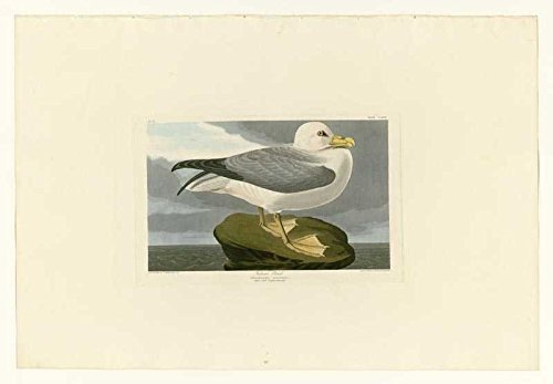100% Hand Painted Oil on Canvas - Audubon - Fulmar Petrel - Plate 264 - 24x36...
