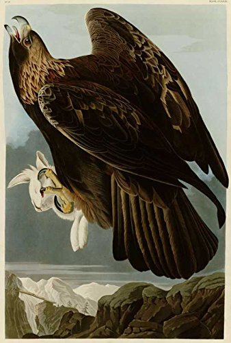 100% Hand Painted Oil on Canvas - Audubon - Golden Eagle - Plate 181 - 24x36 ...
