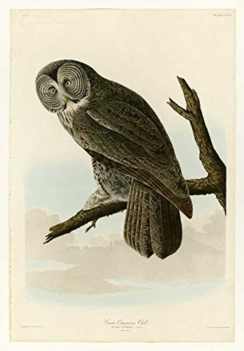 100% Hand Painted Oil on Canvas - Audubon - Great Cinereous Owl - Plate 351 -...