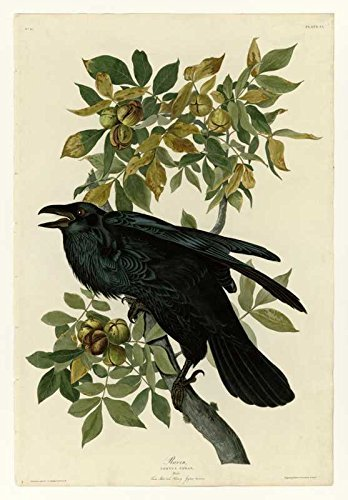 100% Hand Painted Oil on Canvas - Audubon - Raven - Plate 101 - 20x24 Inch