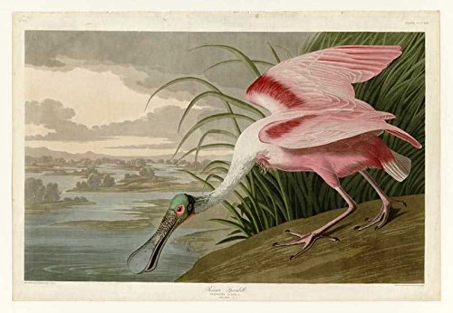 100% Hand Painted Oil on Canvas - Audubon - Roseate Spoonbill - Plate 321 - 2...