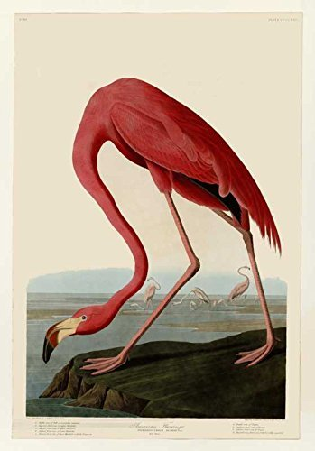 100% Hand Painted Oil on Canvas - Audubon - American Flamingo - Plate 431 - 2...