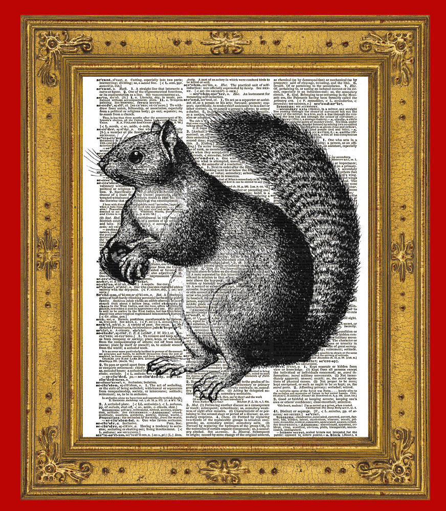 SQUIRREL Forest Animal with Acorn Vintage Dictionary Art Print No. 0067