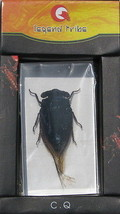 Insect Paperweight D Bugs  - $11.87