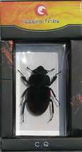 Insect Paperweight C Bugs  - $11.83