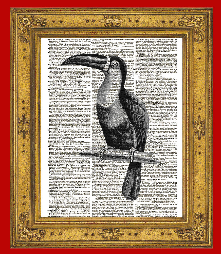 TOUCAN Bird Animal Vintage Dictionary Art Print No. 0074