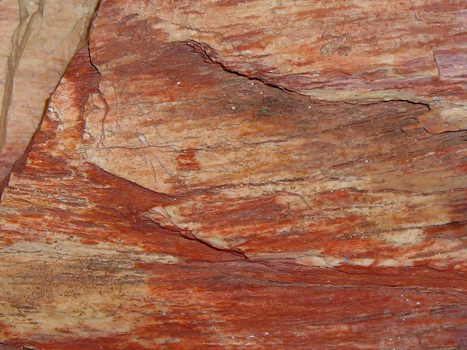 Colorful Rough Arizona Petrified Wood Specimen
