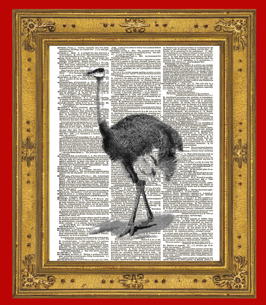 OSTRICH Bird Animal Vintage Dictionary Page Art Print No. 0076