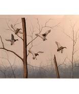 Mallards By Dave Chapple - $695.98