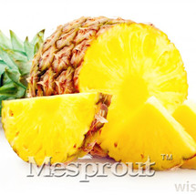 100pcs Pineapple Seeds Sweet Juicy Delicious Fruit Seeds Rare Exotic Bonsai  - $5.10