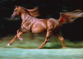 Langrish Brown Stallion Poster - $5.90