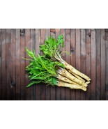 2 Organic Horseradish Crowns / Roots / Plants - Easy To Grow - Hottest -... - $23.79