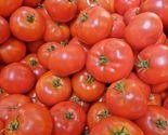 2 thumb155 crop
