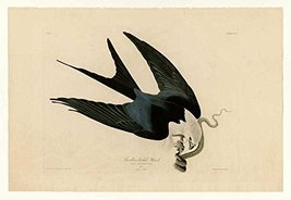 100% Hand Painted Oil on Canvas - Audubon - Swallow-tailed Hawk - Plate ... - $315.81