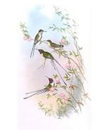 Hummingbird Magnet #4 - $7.99