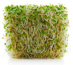 SHIP From US, 2000 Seeds Alfalfa Sprouting Seeds, DIY Healthy Vegetable AM - $63.99