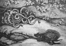 AESOP FABLES Porcupine & Snakes - 1811 Original Etching Print - $21.60