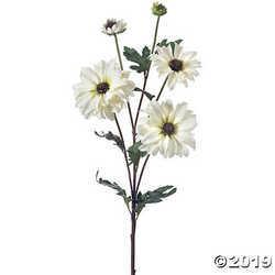 """Shasta Daisy X3 + Bud 24""""-White"""