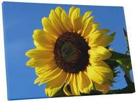 "Pingo World 0809QG41IFM ""Sunflower Flower"" Gallery Wrapped Canvas Wall Art, 30""  - $53.41"