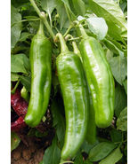 SHIP From US, 500 Seeds Hatch Chile Pepper Seeds, DIY Healthy Vegetable AM - $66.99