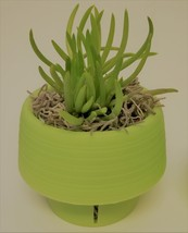"Senecio Succulent in Green Self-Watering Pot, Live Plant Barberton 3"" Planter image 3"