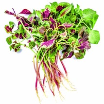 500pcs Red Amaranth Vegetable Seeds Easy to manage High Nutrition - $4.95