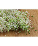 Very Healthy Fresh Seeds Alfalfa VNS Sprouting 5 Variety #IMA35 - $15.99+