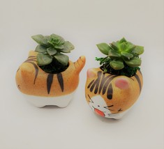 """Echeveria Succulents in Laughing Cat Planters, Live Plants in 2.5"""" Kitten Pots image 2"""