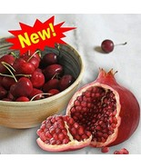 CHERRY POMEGRANATE FRAGRANCE OIL - 1 OZ - FOR CANDLE & SOAP MAKING BY VI... - $5.34