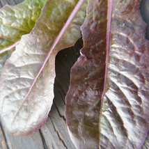 SHIP FROM US ORGANIC MERVEILLE DES QUATRE SAISONS LETTUCE SEEDS ~2 Oz SE... - $61.56