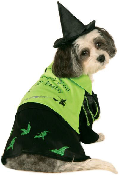 Halloween Witch Hat for Dogs Size Small-Medium