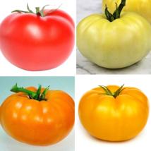 SHIP FROM US 40 Seeds Mixed Beefsteak Tomato,DIY Vegetable Seeds AM - $31.99