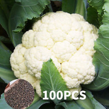 A2D9 B585 Fruits Vegetables Cauliflower Seed Brassica Oleracea Seeds Org... - $2.86