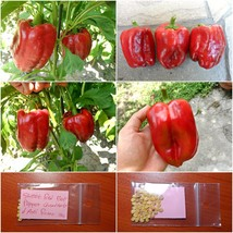 Sweet Red Bell Pepper ''Quadrato d' Asti Rosso'' ~50 Top Quality Seeds -... - $15.48