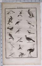 1788 ORIGINAL PRINT BIRDS JAY HUMMING BIRD KINGFISHER BUSTARD RING OUZELL - $117.89