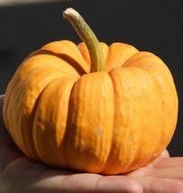 Pumpkin Seeds - Jack Be Little  - Gardening - Yard, Garden & Outdoor Living - $31.99+