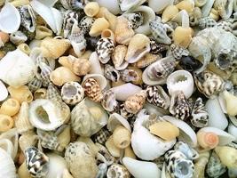 Mixed Sea Shell Craft Specimen Jewelry - $12.01