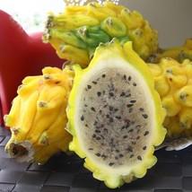 100 pcs/bag Yellow red white pitaya seeds bonsai fruit  Perennial Plants... - $2.16