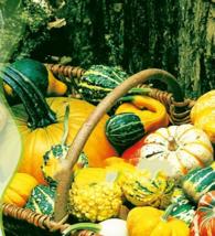 8 Pumpkin Seeds Cucurbita Multi Fin Melon Organic Vegetable B004