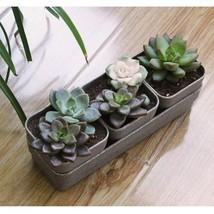 Succulent Plant Pot Planter Desktop Flowerpot With Saucer Tray, Made fro... - ₹683.06 INR