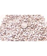 Mini Venetian Seashells Pearl White Pong Trochus Cone Shells Crafts Trocus - $4.94