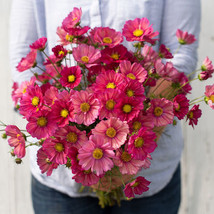 Xsenia Cosmos Flower Seeds Container Flower Seeds - $8.99