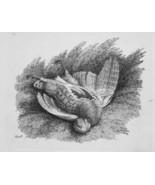 1801 ORIGINAL ETCHING Print by Howitt - Hunting Dead Bird Partridge - $16.20
