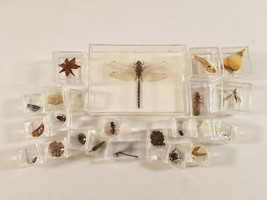 Artifact Insect Entomology Beetle Collection 23 Specimen Dried Real Taxidermy image 1