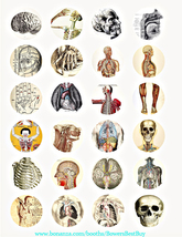human anatomy skulls skeletons vintage clipart digital download collage ... - $2.99