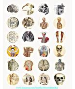 human anatomy skulls skeletons vintage clipart digital download collage ... - $2.99