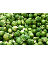 SHIP FROM US 500 HEIRLOOM BRUSSEL SPROUT Brassica Oleracea Seeds SBR4 - $12.00