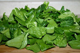 SHIPPED FROM US 3000 Bloomsdale Spinach Spinacia Oleracea Seeds, LC03 - $19.00