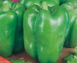 30++ Organic California Wonder Bell Pepper Vegetable Seeds - $14.99