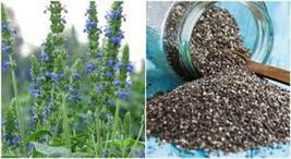 Chia Seeds | Chia Plant Seeds | Chia Herb Plant Seed | 10 seeds - $12.44
